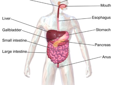 yoga to detox digestive system  therapia